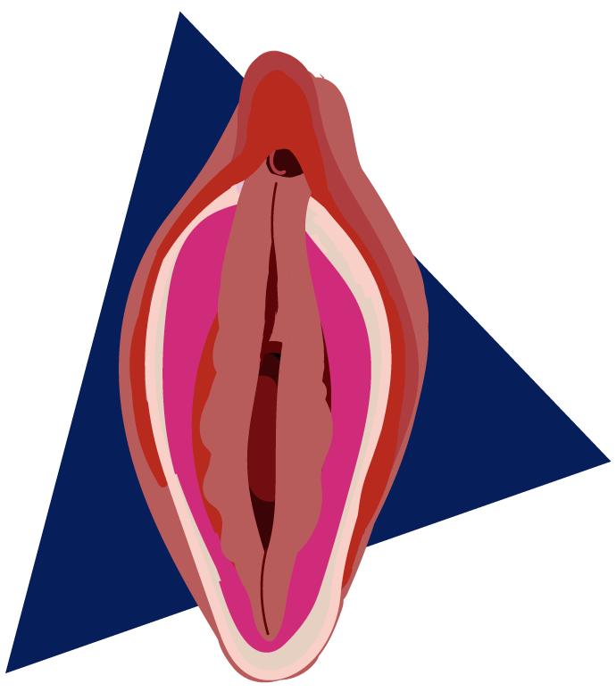 tipos de vulva tulipán