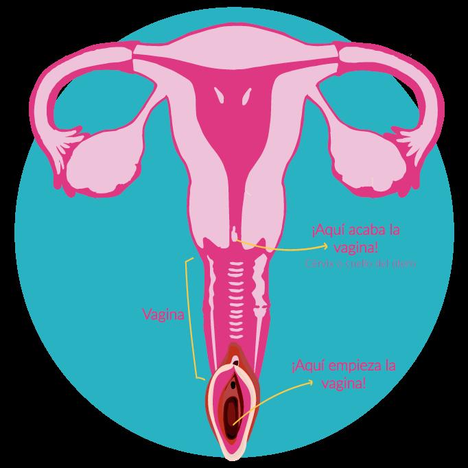 vagina partes